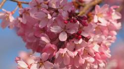 霓虹花开的季节 每天10公里暴走日本
